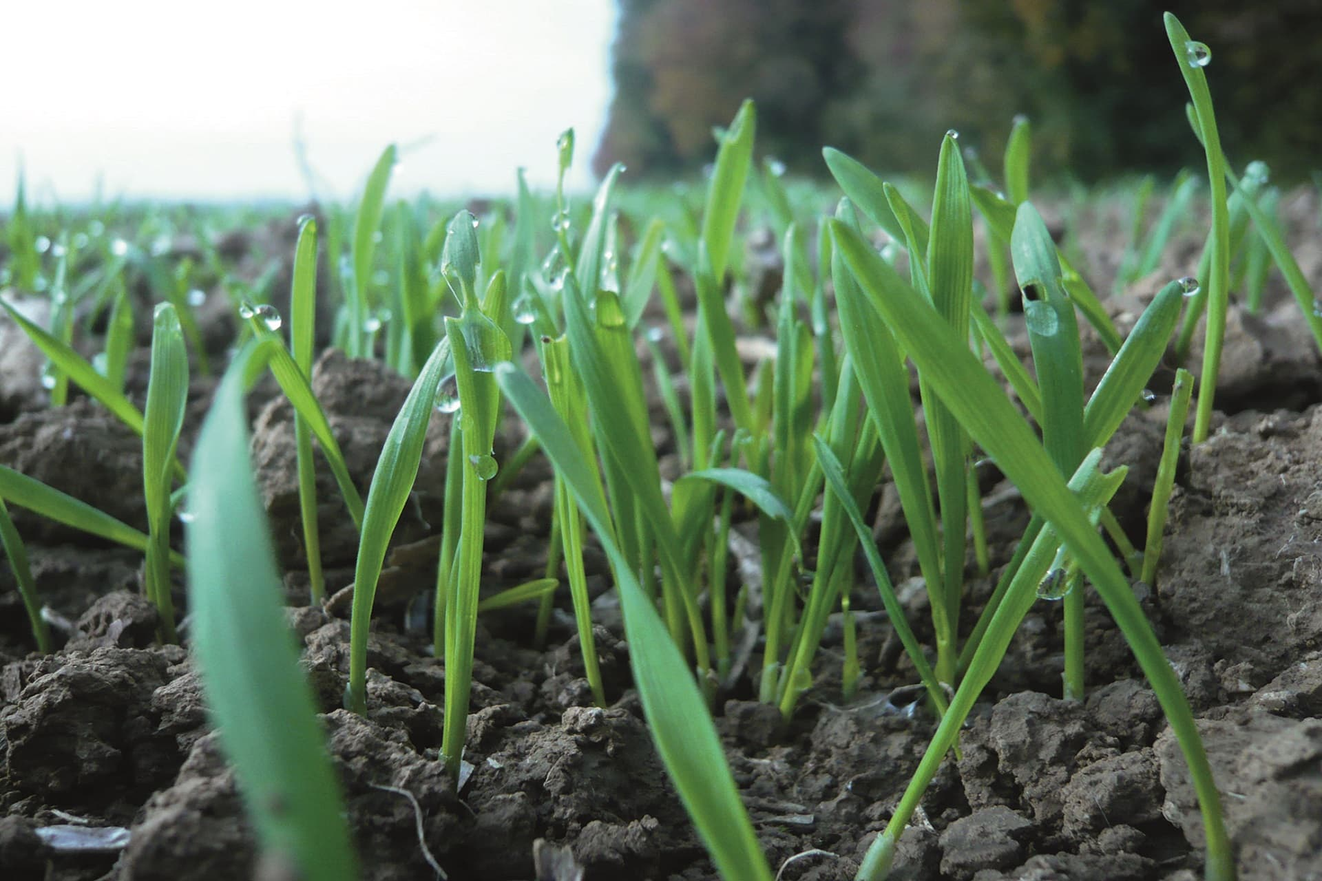 OJI-nouvelle-offre-pour-les-jeunes-agriculteurs-installés